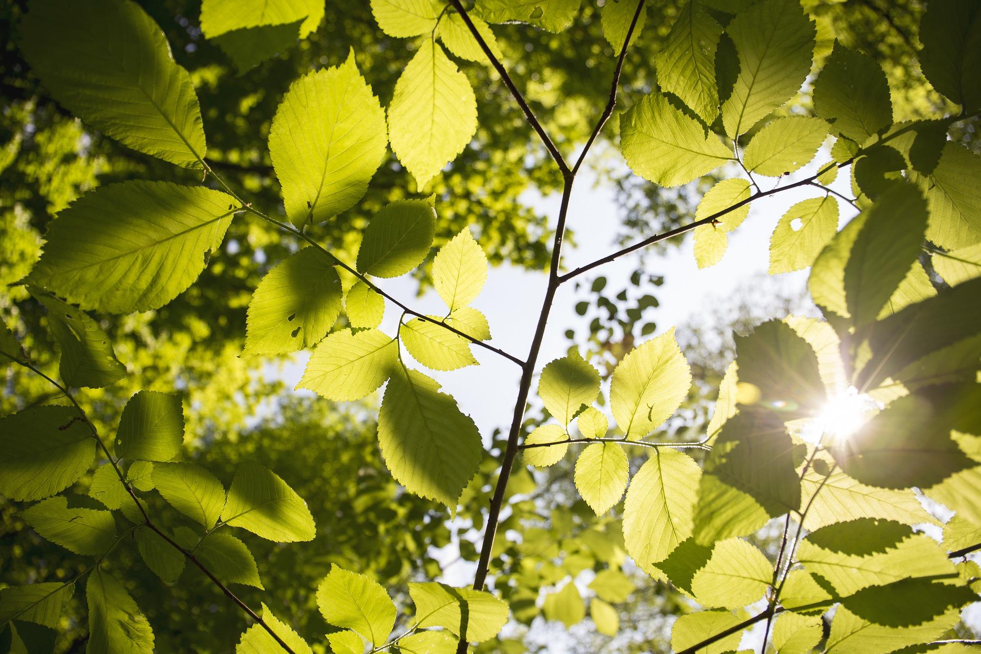 gałąź z liśćmi, fragment drzewa
