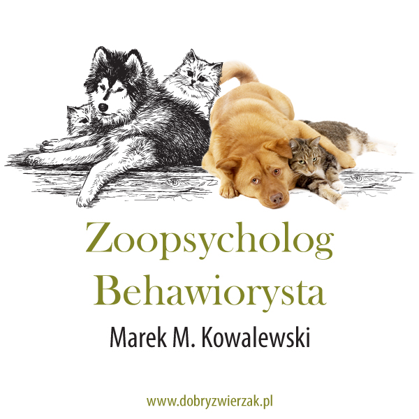 psy i kot